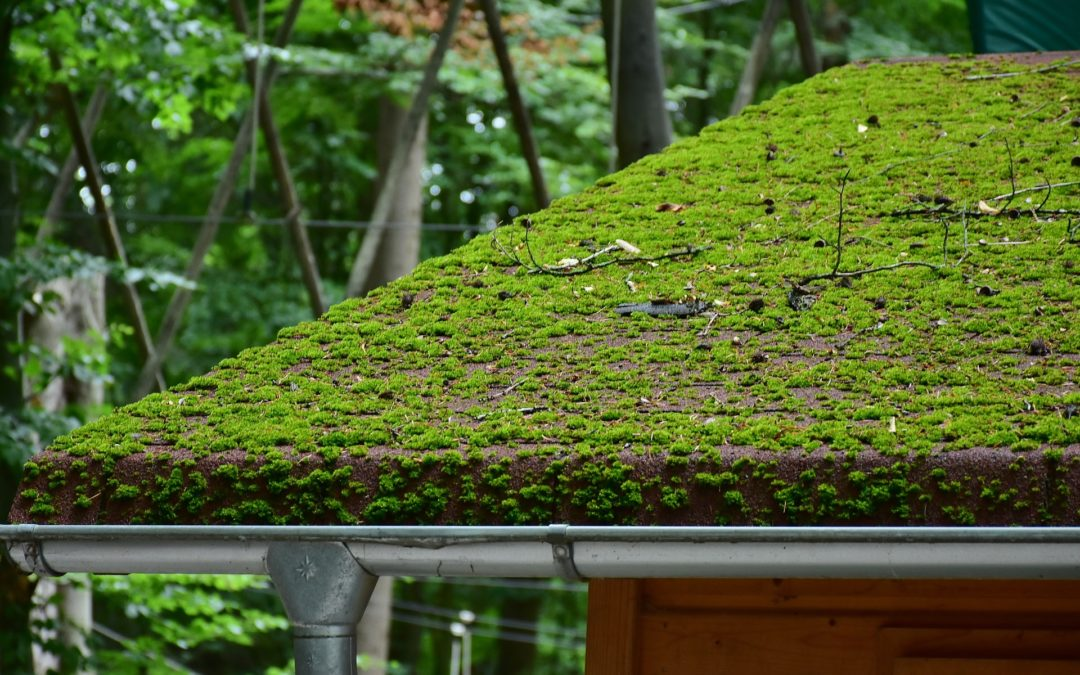 Dealing with Moss on Your Roof